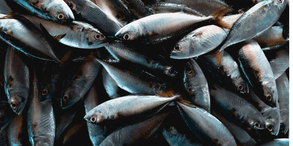 bovine vs marine collagen peptides fish